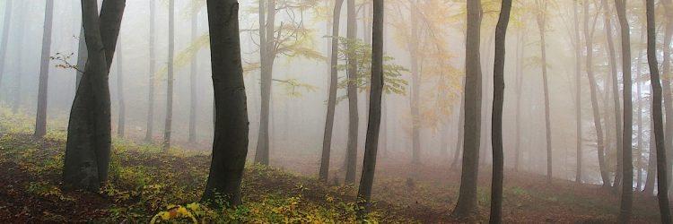 Dlaczego warto chodzić do lasu